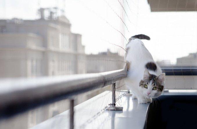 rede-de-proteção-para-gatos
