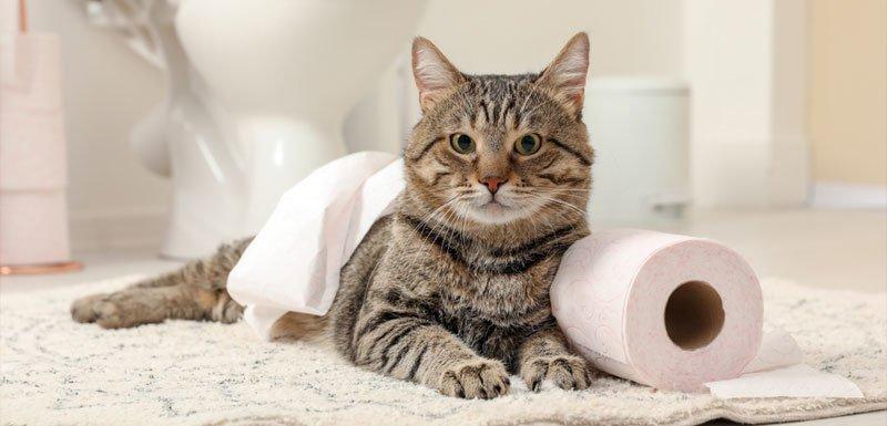 gatos-seguros-em-casa